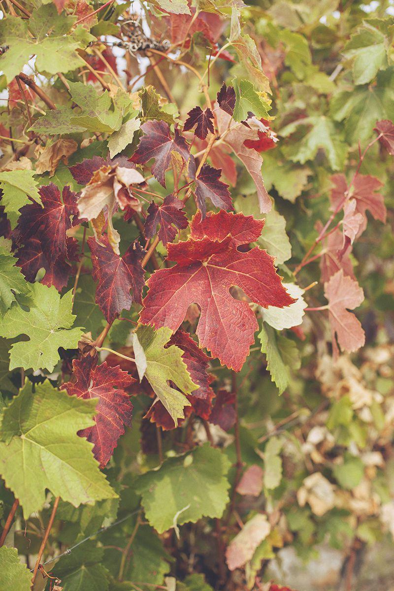 servizio-fotografico-coppia-monferrato-autunno-coronadifiori