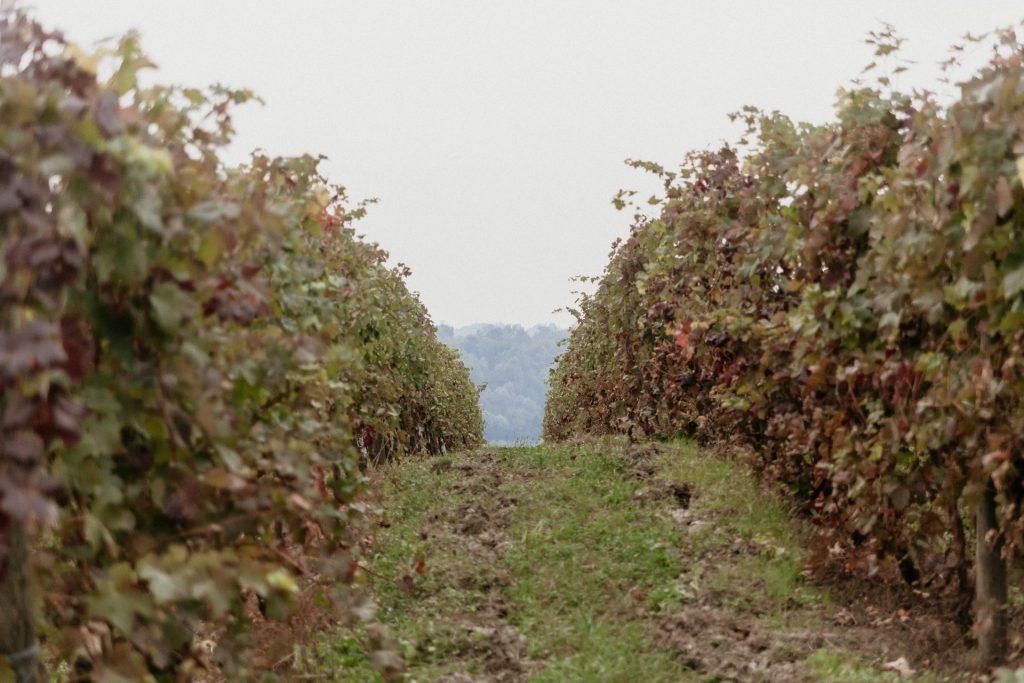 Servizio di coppia nel Monferrato: Elisa e Giampaolo - Tiziana Gallo Fotografa
